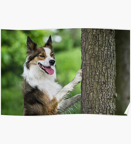 The Dog and the Tree Poster