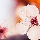 Vivid Spring by Josie Eldred