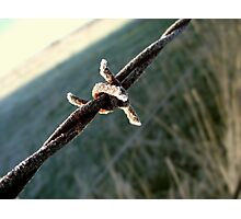 Frozen wire Photographic Print
