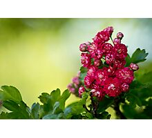 Bright and Flowery Photographic Print