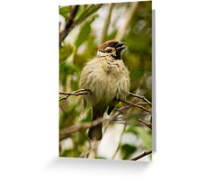 Feathers and Fluff Greeting Card