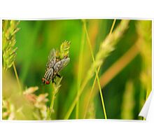 Swamp Fly Poster
