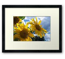 Sunny Day Sunflowers Origin Framed Print