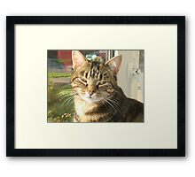 Mia beautiful Framed Print