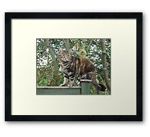 Perching Mia  Framed Print