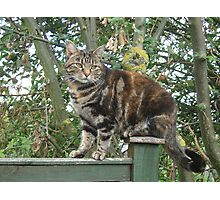 Perching Mia  Photographic Print