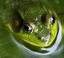 Bullfrog by naturesangle
