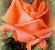 Just Peachy by ElsT