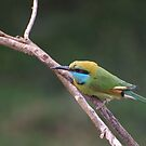 Green bee eater bird by JenniferLouise