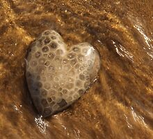 Petoskey Stone by naturesangle