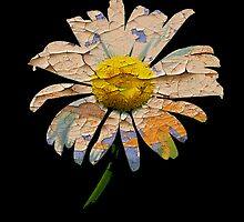 Painted Daisy by Ian Jeffrey