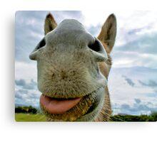 Donkey Humour Canvas Print