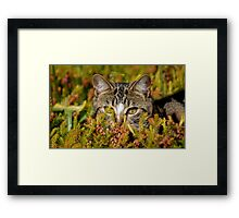 Ready For The Hunt Framed Print