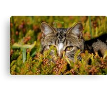 Ready For The Hunt Canvas Print