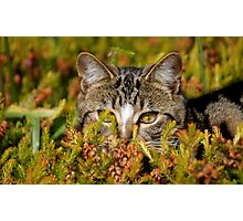 Ready For The Hunt Photographic Print