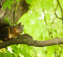 Squirrel in Tivoli Park by Ian Middleton