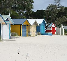 """The Beach House"" Rosebud by cazzgroves"