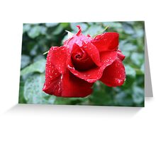 """""""The Rose"""" Greeting Card"""