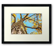 Tree #7 in the Fall Framed Print