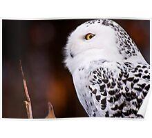 Snowy Owl 2 Poster