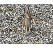 I Is A Bunny Photographic Print