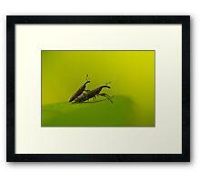 snout beetle Framed Print