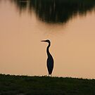 Great Blue Heron - Dusk by Tony Wilder