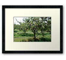 Glass Art Apple Tree Framed Print