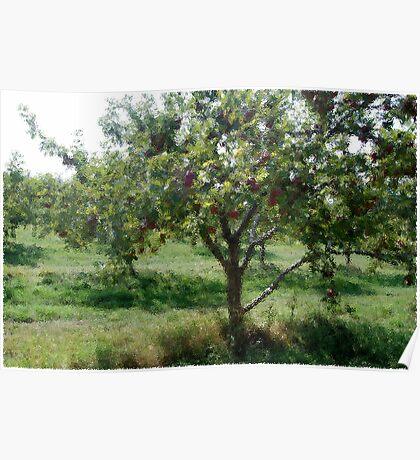 Glass Art Apple Tree Poster