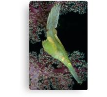 Robust Ghostpipefish Canvas Print