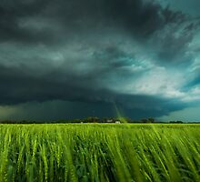 Kansas greens by johnfinney