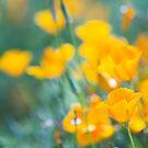 Field Of Poppies by Josie Eldred