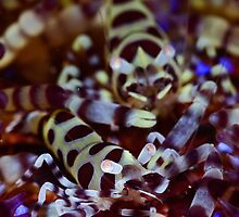 Coleman's Shrimp by MattTworkowski