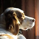 Bailey at 18 months. by Larry Lingard-Davis