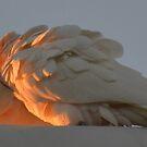 Love Birds by MissChezz