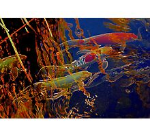 Koi Garden Abstract Photographic Print
