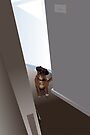 Dog in the doorway who shouldn't be there by Matt Mawson