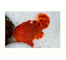 Painted Frogfish Art Print