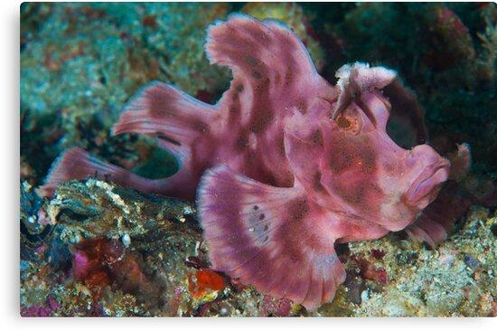 Paddleflap Scorpionfish by MattTworkowski