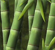 Bamboo by Gary Wilkinson