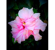 Light Pink Hibiscus Photographic Print