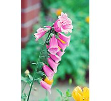 Wide Floral Bell Photographic Print