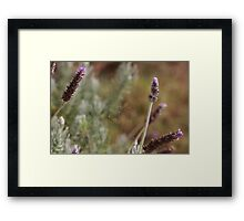 Web of Water Droplets Framed Print