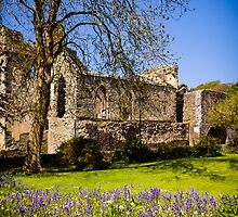 Ruins of the abbey at St Davids by mlphoto