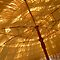 Best Lumix image of an umbrella