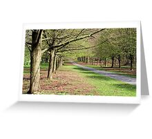 Parallel Trees Greeting Card