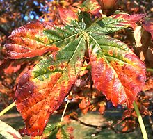 Autumn leaves by Revd Andy Barton