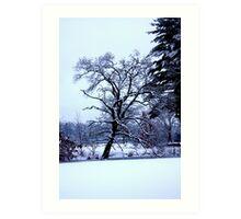 Frozen Tree Art Print