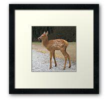 Precious Little Elk Fawn Framed Print