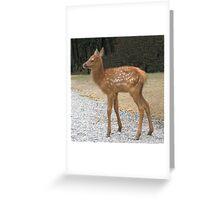 Precious Little Elk Fawn Greeting Card
